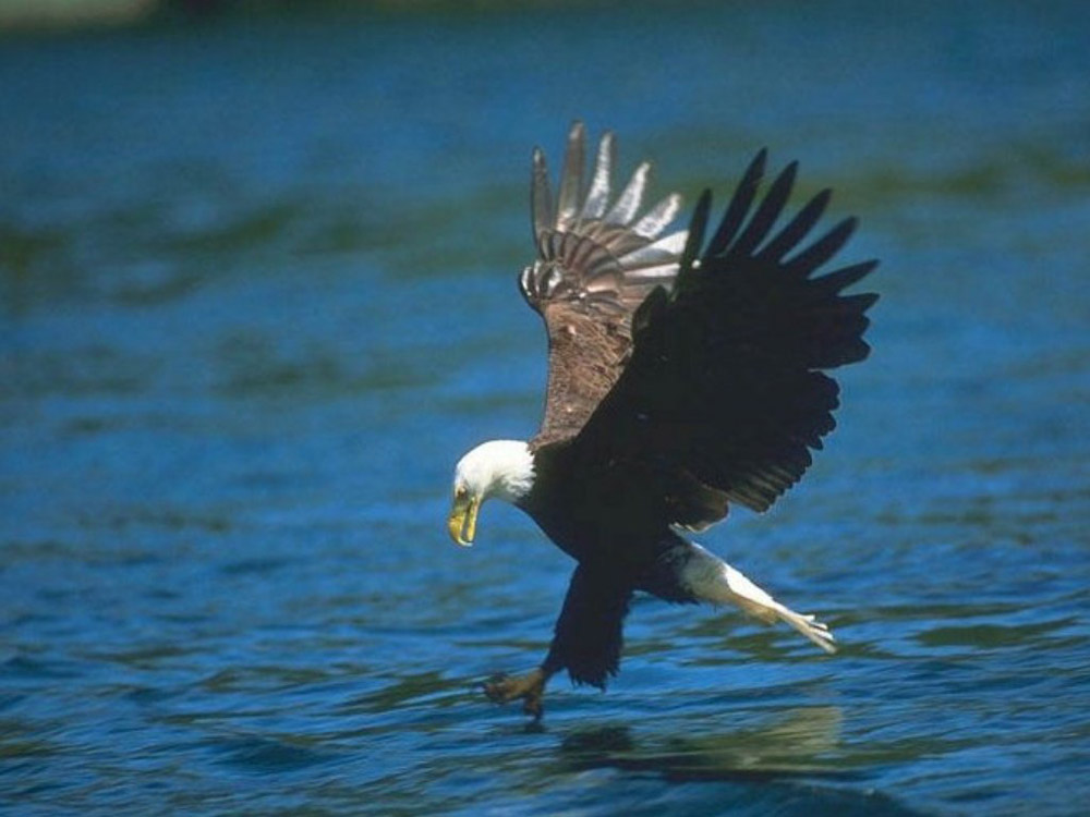 aguila chatrooms Watch video to view and participate in chat you must be logged in scroll down below our photos for chat room rules aef's eagle nest cam #1 (ptz) off air.